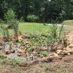 Imagens do curso de Jardins Filtradores