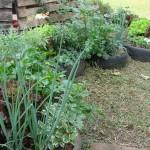 Sustentabilidade na Prática - Vivência de Permacultura