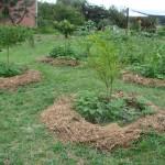 Agroecologia Daterra